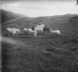 Shetlands Scolloway 1