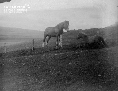 Shetlands Scolloway 3