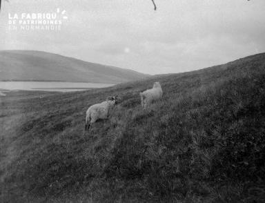 Shetlands Scolloway 4