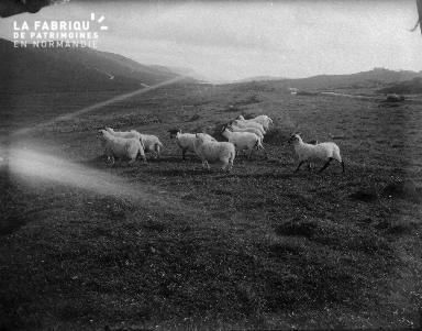Shetlands Scolloway 7