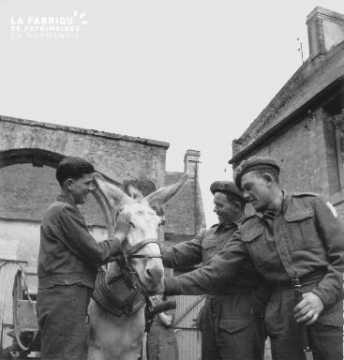 Les soldats canadiens et l'âne à Creully