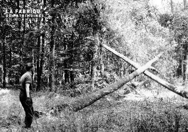 Soldat canadien dans la foret de Balleroy