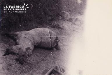 Cadavre de cheval, victime de la guerre