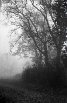Campagne sous la brume