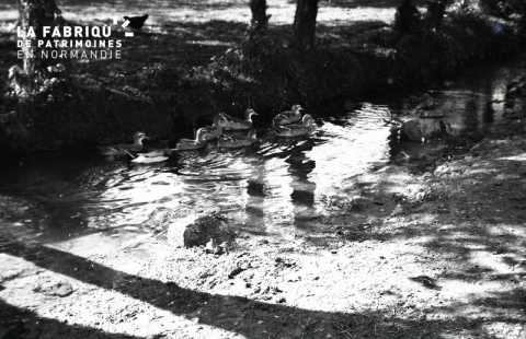 Canards au ruisseau