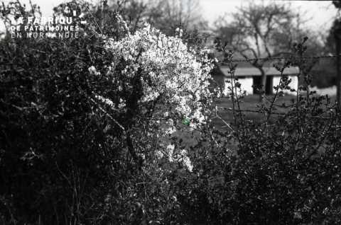 Arbuste devant clôture