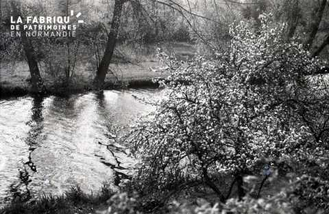 Arbre en fleur au bord de la rivière