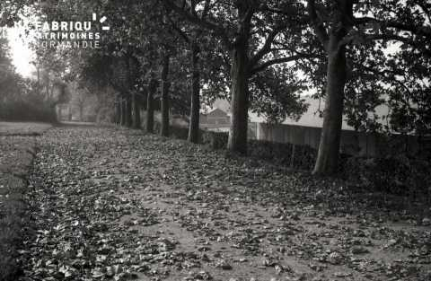 Chemin jonché de feuilles
