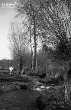 Cours d'eau dans les campagnes