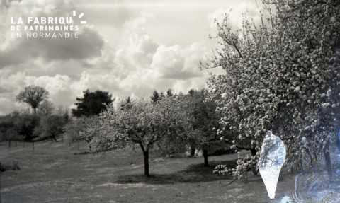 Champs de pommiers en fleur
