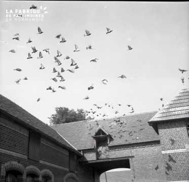 Envol de pigeons