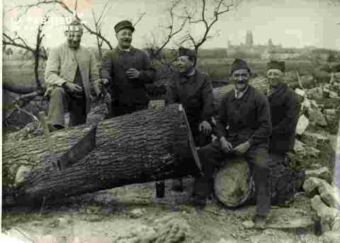 Militaires coupant des arbres sur le grand cours