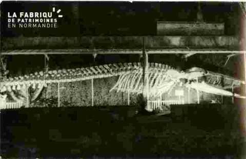 Baleine de Luc/mer illuminée