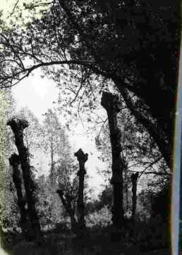 Le bas de Venoix, le long de l'Odon