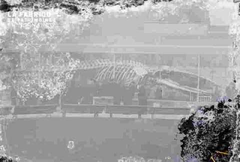 Squelette de baleine, Luc/s/mer ?, très ab