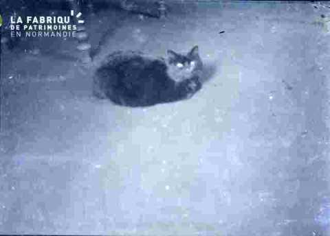 Ponpon, Le chat