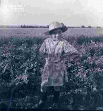 Séjour chez M Criquet, Alain au milieu du champ de haricots