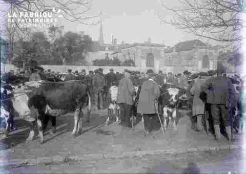 Foire -expo.foule en costume et accessoire. Avec vaches