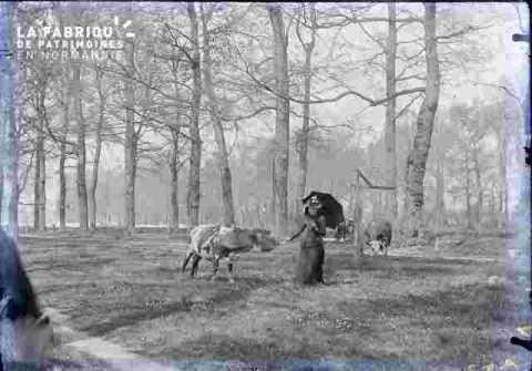 La prairie -Femme  et vache