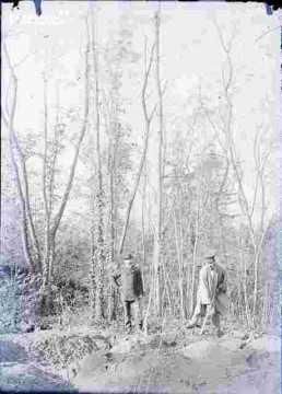 Travaux dans un bois