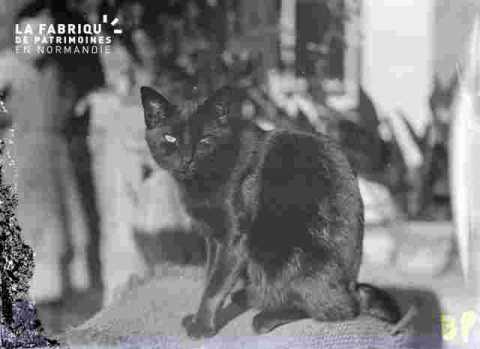 (très abimé) chat