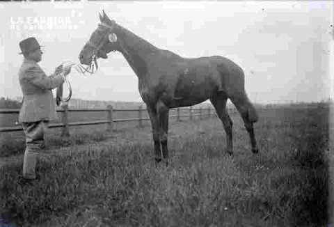 Concours de chevaux de selle