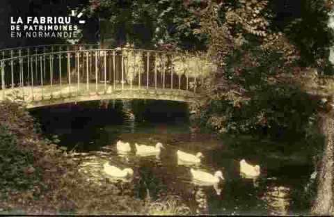 Rivière avec canards