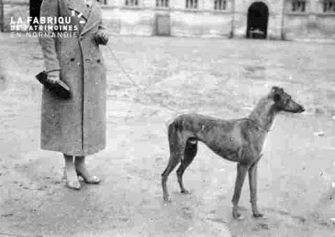 Divers chien