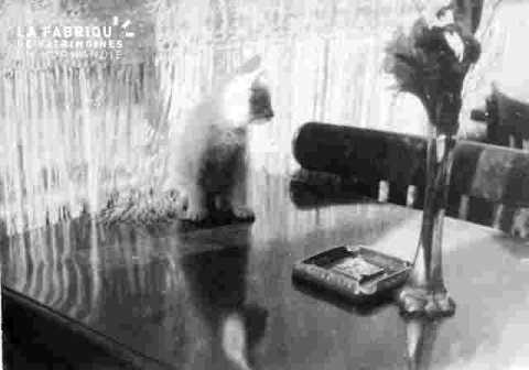 Le chat Pompon