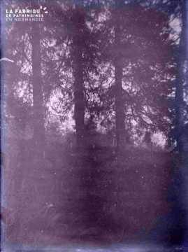 Argentan forêt