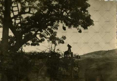 Soldat dans les branches