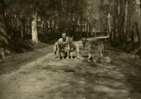 Soldat français avec 4 chiens