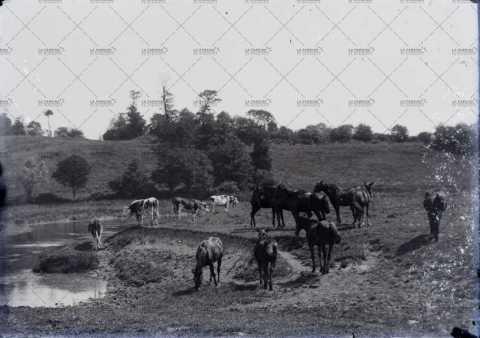 Vaches et chevaux au bord de l'eau