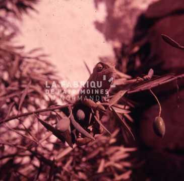 Un iguane photographié par un appelé de l'armée français en Algérie