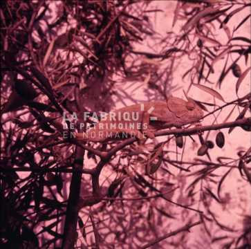 Iguane prit en photographie par un appelé de la guerre d'Algérie