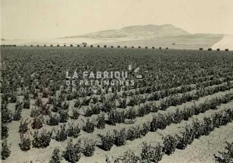 Maraîchage et agriculture en Algérie