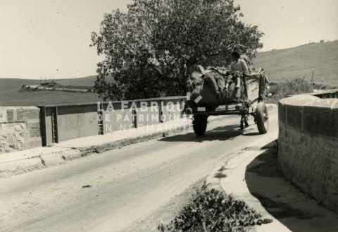 Charrette passant sur un pont en Algérie