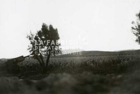Canon de 105 mm M2 en position en Algérie