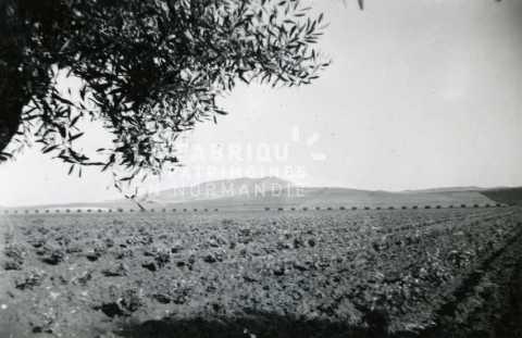 Champs cultivés en Algérie