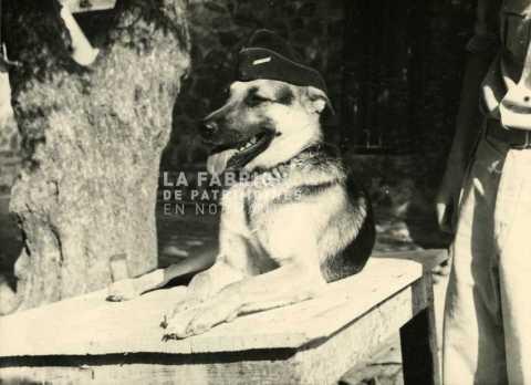 Berger allemand avec un calot en Algérie