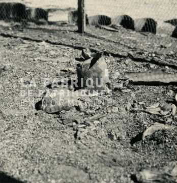 Tortue en Algérie