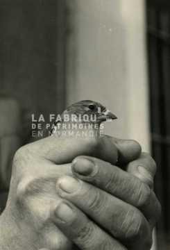 Jeune faucon pèlerin dans les mains d'un soldat français en Algérie