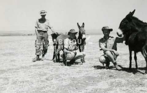Soldats français avec des ânes en Algérie