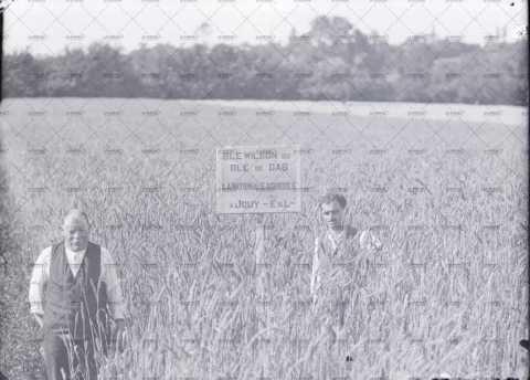 Homme au milieu d'un champ de blé