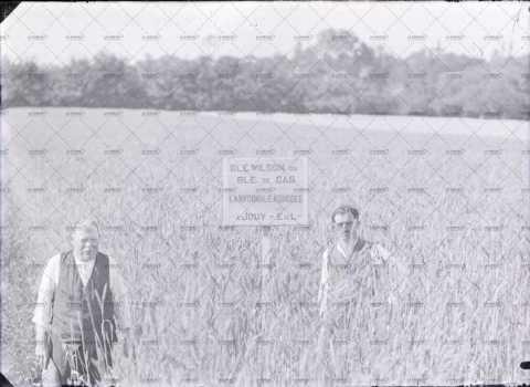 Hommes dans un champ de blé