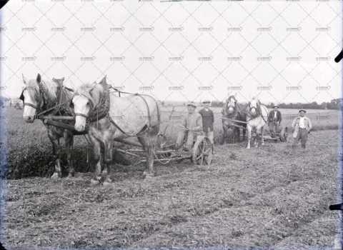scène agricole, moisson