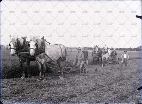 Scène agricole