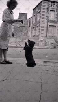 Dressage d'un chien à Pont-d'Ouilly