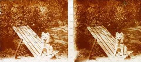 Chien sur une chaise de jardin