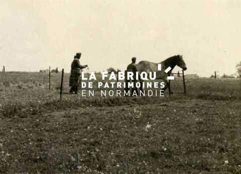 Soldat allemands près d'un cheval au milieu d'un champ